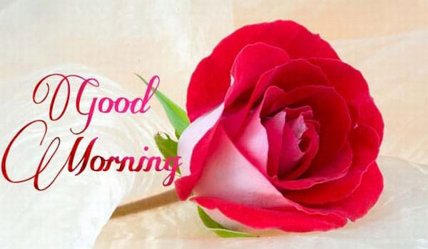 Good Morning Wishes for Lover